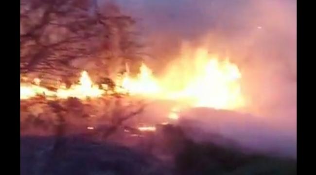 GÖRÜNTÜLÜ HABER/ Trabzon'da Orman Yangını